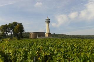 Visit of the Champagne vineyard